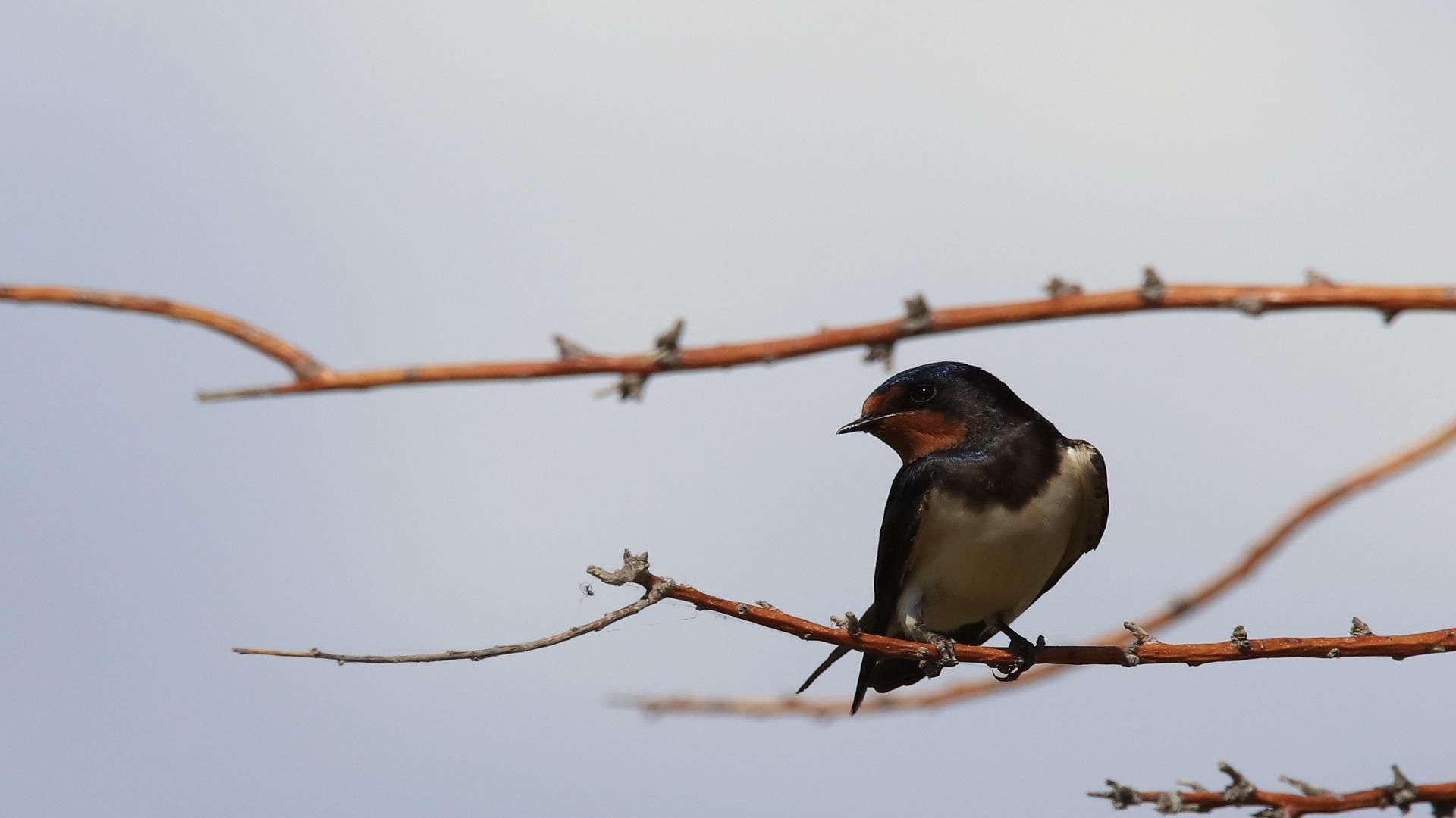 هكذا تعود الطيور بالنفع على بيئتنا