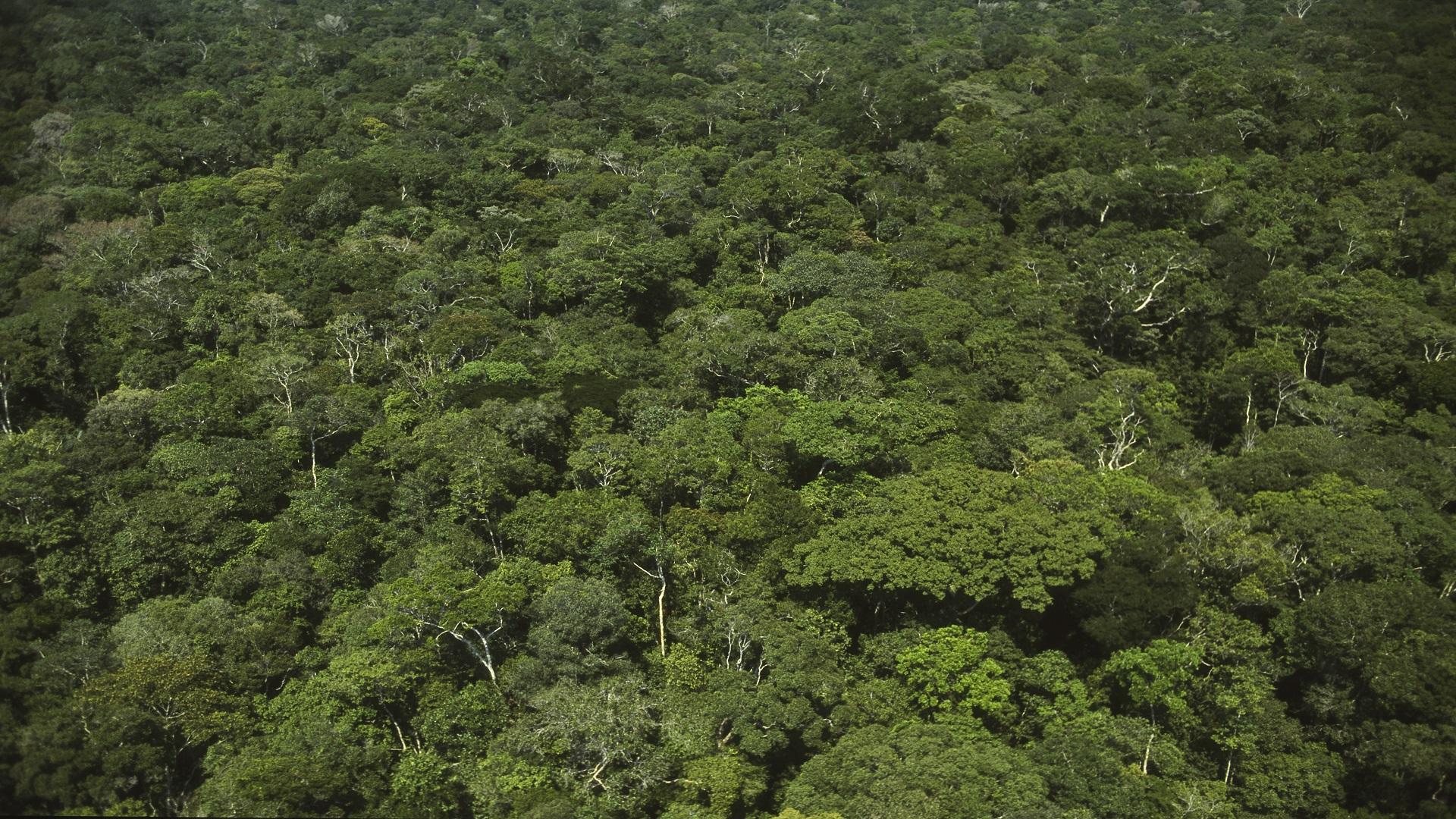 معلومات قد لا تعرفها عن غابات الأمازون