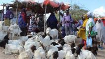 أسواق الأضاحي في الصومال (فرانس برس)