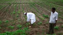 سياسة/مزارعون سودانيون/(أشرف الشاذلي/فرانس برس)