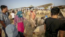 أسواق الأضاحي في تونس (الأناضول)