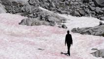 جليد زهري على جبال الألب
