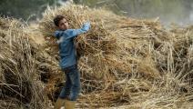 المزارعون، كما المواطنون، يدفعون ثمن فوضى سوق القمح (فرانس برس)