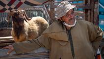 العيد في المغرب (فاضل سنا/ فرانس برس)