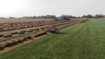 حملات شبابية لزراعة الأشجار في العراق تلقى تجاوباً واسعاً