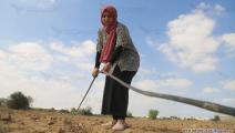 خريجات غزة (عبد الحكيم أبو رياش)