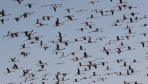 لغة الطيور (آشيش فيشناف/ getty)