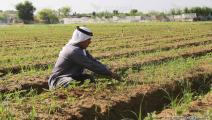 زراعة غزة (عبد الحكيم أبورياش)