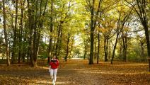 غابة في ألمانيا (عبد الحميد حسباس/ الأناضول)