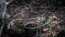 Japan's Suicide Forest FUJIKAWAGUCHIKO, JAPAN - MARCH 13: A rope remains at the scene of an apparent suicide in Aokigahara forest, on March 13, 2018 in Fujikawaguchiko, Japan. Aokigahara forest lies on the on the northwestern flank of Mount Fuji and in recent years has become known as one of the world's most prevalent suicide sites. The density of the forest is believed to be a contributing factor with people often tying string to trees to find their way back to a path in case they change their mind. In 201