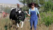 أسماء القماطي شابة تربي الأبقار في تونس- العربي الجديد