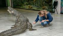 تحنيط تمساح ساتورن- تويتر