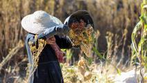 تضرر الآلاف من المزارعين اليمنيين (أحمد الباشا/ فرانس برس)
