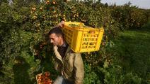 زراعة في تونس- فرانس برس