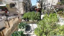 زراعة (عبد الحكيم أبو رياش)