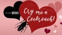 شاهد حبيبك السابق وهو يؤكل كصرصور في عيد الحب- فيسبوك