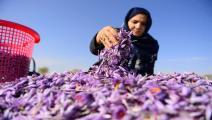 الزعفران في أفغانستان