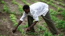 زراعة في السودان (أشرف الشاذلي/ فرانس برس)
