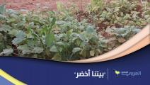 """""""بيتنا أخضر"""" مبادرة تشجع على الزراعة في المنازل بالسودان"""