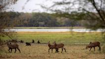 واحدة من المحميات الطبيعية في السودان (عبد المنعم عيسى/ Getty)