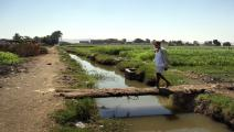 زراعة في مصر/Getty