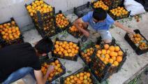 برتقال سورية (دليل سليمان/فرانس برس)