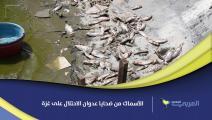 الأسماك من ضحايا عدوان الاحتلال على غزة