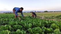 يعملان في الزراعة (عطا كيناري/ فرانس برس)
