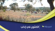 موسم حصاد الكمّون في إدلب