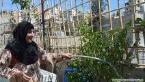 زراعة في مخيم عين الحلوة 1 (العربي الجديد)