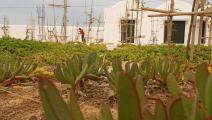حديقة أفريقيا مقبرة المهاجرين في تونس 1 (فتحي الناصري/ فرانس برس)