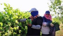 عاملات أردنيات في الزراعة (فيسبوك)
