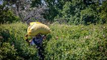 دعوات لتقليص التبعية الزارعية في المغرب (فضل سنا/فرانس برس)