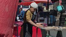 فتى يجمع القش في كابول (عاتق بيري/ فرانس برس)