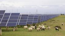 المستثمرون في الطاقة الشمسية تكبدوا أكبر الخسائر