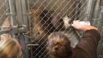 تطعيم حيوانات (يوتيوب)