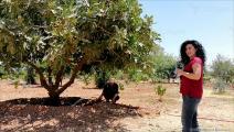شمال شرقي سورية يفتقد الغطاء النباتي (العربي الجديد)