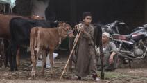 سوق الأضاحي في مصر 1 (الأناضول)