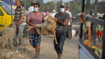 سوق الأضاحي في تونس (ياسي قايدي/ الأناضول)