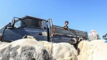 سوق الأضاحي في إدلب في سورية (عز الدين قاسم/ الأناضول)