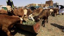 قبل ذبح الأضاحي في الخرطوم (أشرف شاذلي/ فرانس برس)