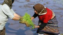 تستهلك الزراعة في إيران كميات كبيرة من المياه (Getty)