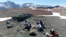"""اكتشاف حفرية """"جد"""" تماسيح العصر الحديث في تشيلي- تويتر"""