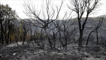 هذا ما فعلته الحرائق بالغابات (العربي الجديد)
