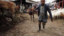 الثروة الحيوانية في اليمن (محمد حمود/الأناضول)