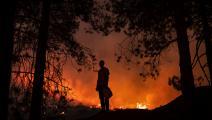 قضت الحرائق على مساحات غابية كبيرة (فاضل سنا/ فرانس برس)