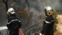 تسببت النيران في إتلاف نحو ألف هكتار من الغابات والمحاصيل الزراعية (ياسين قايدي/الأناضول)