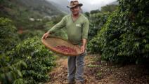 زراعة البن في البرازيل/ فرانس برس