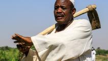 الزراعة في السودان/ فرانس برس