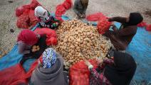 زراعة سورية غيتي